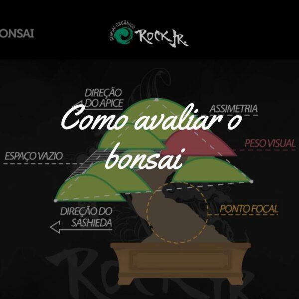 Como Avaliar o Bonsai