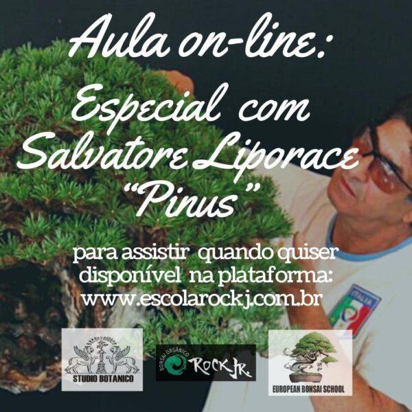Especial Salvatore Liporace – Pinus